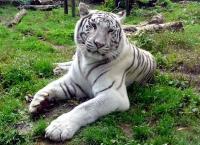 les-parcs-animaliers_10-diaporama.jpg
